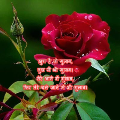 Happy Rose Day Pictures In Hindi